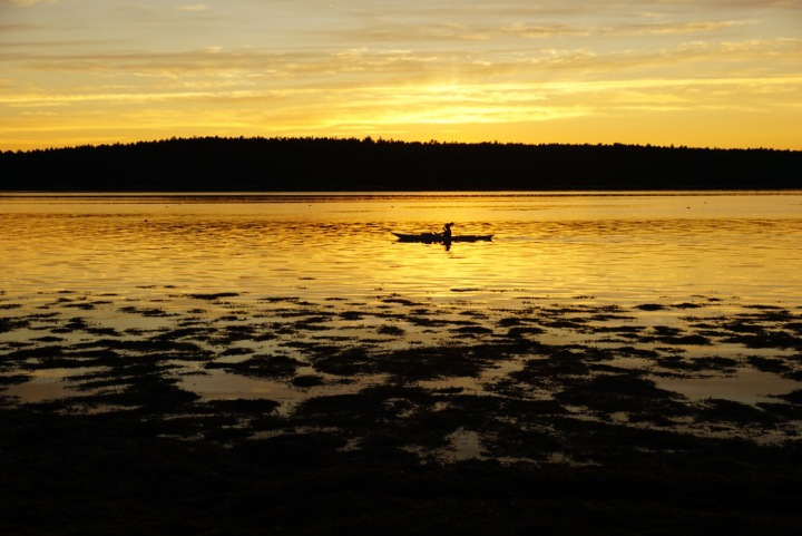Solo Golden Kayak Floods Cove, Maine