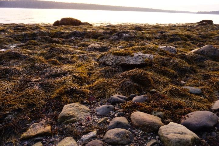 Low Tide Friendship,Maine